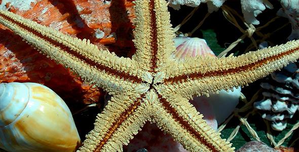 Starfish and Sea Shells 2