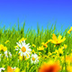 Green Meadows and Flowers - VideoHive Item for Sale
