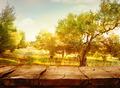 Olive orchard - PhotoDune Item for Sale