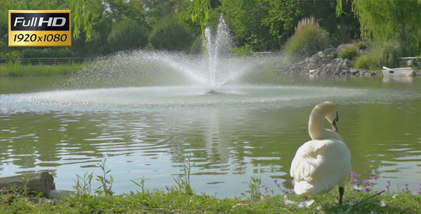 Fountain And Swan