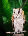 Portrait of an owl - PhotoDune Item for Sale