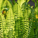 Young fern plants - PhotoDune Item for Sale
