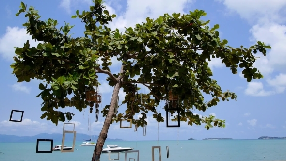 Decorated Tree On Beach Against Luxury Yachts And