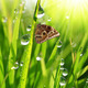 dew drops and butterfly - PhotoDune Item for Sale