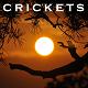 Crickets Warm Summer Night