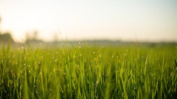 Emerald Grass Pack