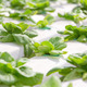 Hydroponics vegetable farm - PhotoDune Item for Sale
