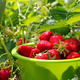Ripe strawberries in a bowl on the field - PhotoDune Item for Sale