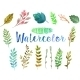 Vector Watercolor Aquarelle Branches And Leaves. - GraphicRiver Item for Sale