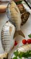Striped sea bream - PhotoDune Item for Sale