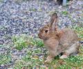 brown rabbit - PhotoDune Item for Sale