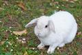 white rabbit - PhotoDune Item for Sale
