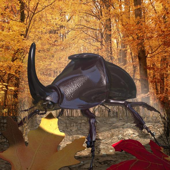 3DOcean Rhinoceros Beetle RIGGED 11565604