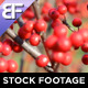 Fall Foliage - VideoHive Item for Sale