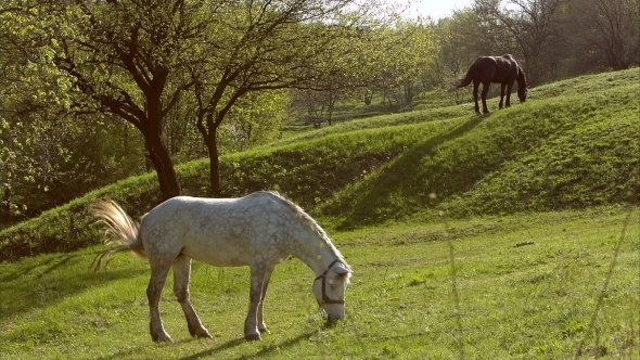 Horses In a Field Landscape