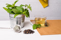 Herbal tea with melissa in a glass cup - PhotoDune Item for Sale