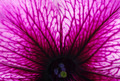 Abstract flower - PhotoDune Item for Sale