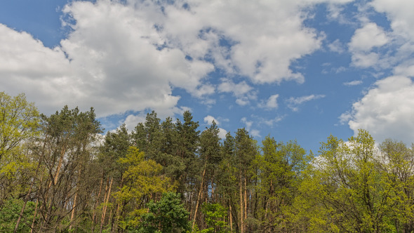 Forest And Clouds In Motion 1