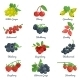 Berries Flat Icons Set - GraphicRiver Item for Sale