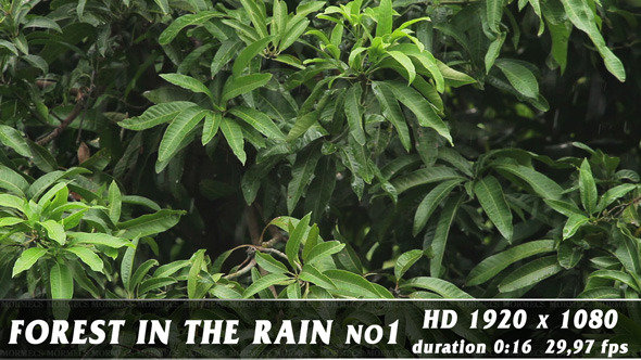 VideoHive Forest in Rain No.1 11581238
