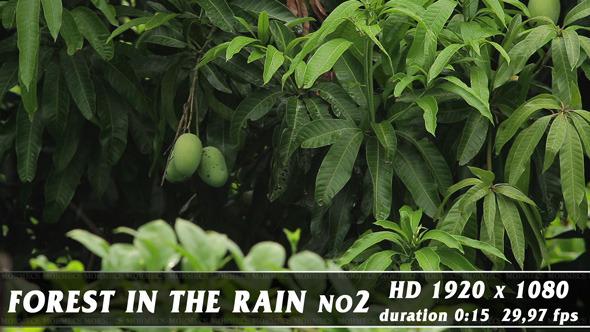 VideoHive Forest in Rain No.2 11581257