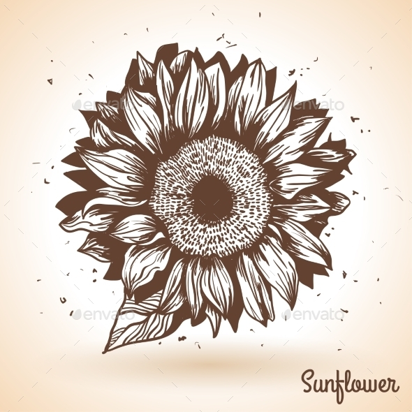 GraphicRiver Sunflower in Vintage Style 11583072