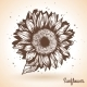 Sunflower in Vintage Style - GraphicRiver Item for Sale