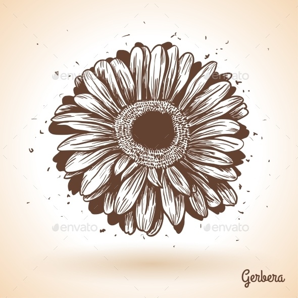 GraphicRiver Hand Drawn Gerbera Flower 11583088