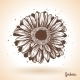 Hand Drawn Gerbera Flower - GraphicRiver Item for Sale