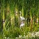 White Egret Standing Among Green Reeds Wetlands - PhotoDune Item for Sale