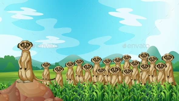 GraphicRiver Meerkats 11587097