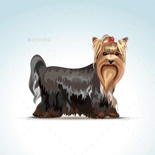 GraphicRiver Yorkshire Terrier Dog 11590819