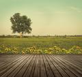 Wooden table top in open fields of dandelions - PhotoDune Item for Sale