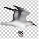 Realistic Seagulls - VideoHive Item for Sale
