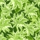 Green Leaves Pattern - GraphicRiver Item for Sale