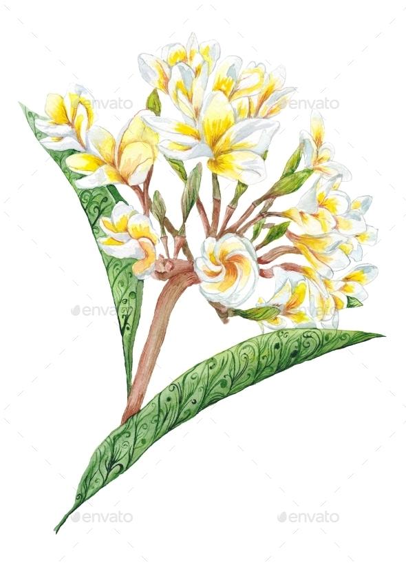 GraphicRiver Plumeria Watercolor Plant 11602080