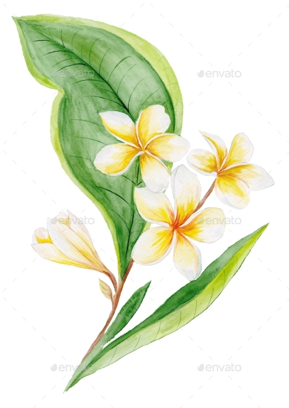 GraphicRiver Plumeria Watercolor Plant 11602100