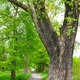 large tree - PhotoDune Item for Sale