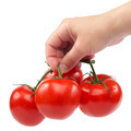 A branch of fresh tomatoes in hand on white background. - PhotoDune Item for Sale