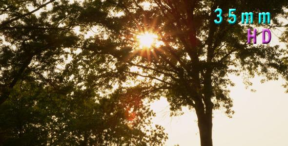 Dandelion Blowing In The Wind 03