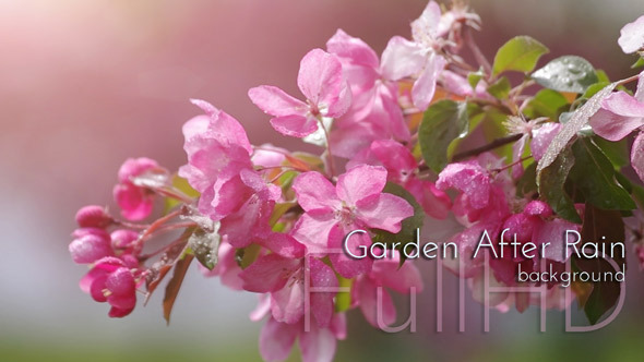 Blossoming Garden After Rain