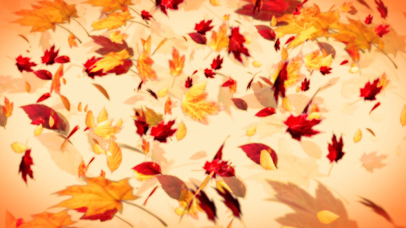 Maelstrom of Autumn Leaves Background