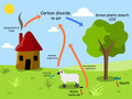 Carbon dioxide cycle - PhotoDune Item for Sale