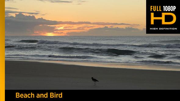 Beach and Bird