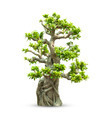 Bonsai trees - PhotoDune Item for Sale