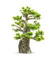 Bonsai trees - PhotoDune Item for Sale