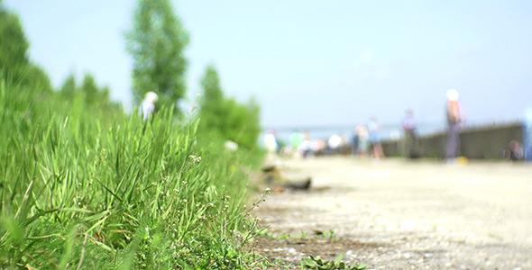 Green Grass On City Riverside 2