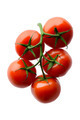 Red tomatoes on a branch - PhotoDune Item for Sale