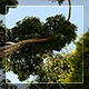 Tropical Trees Against The Sky - VideoHive Item for Sale