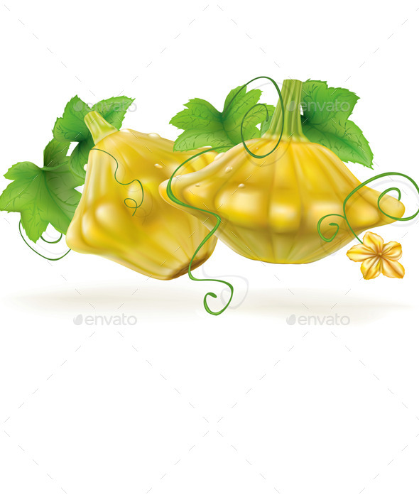 GraphicRiver Patty Pan Squash 11627647
